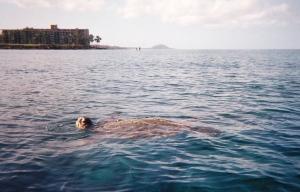 turtles, turtles, everywhere!