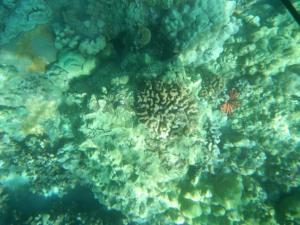 Underwater land