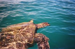 Friendly turtles!