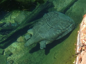 Strange turtle!!