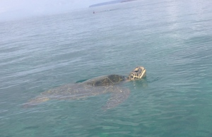 One turtle!