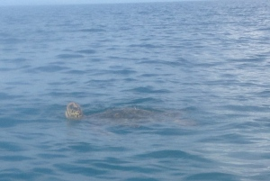 Seven turtles!