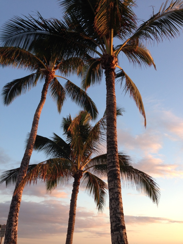 Lovely sunset lighting up the palm trees!