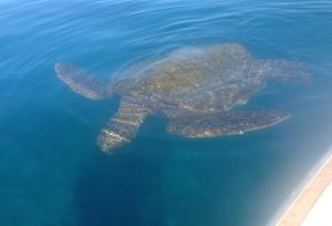 Lots of turtles!