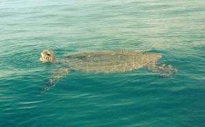 Turtle buddies!